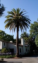 Garner House in Memorial Park Claremont CA